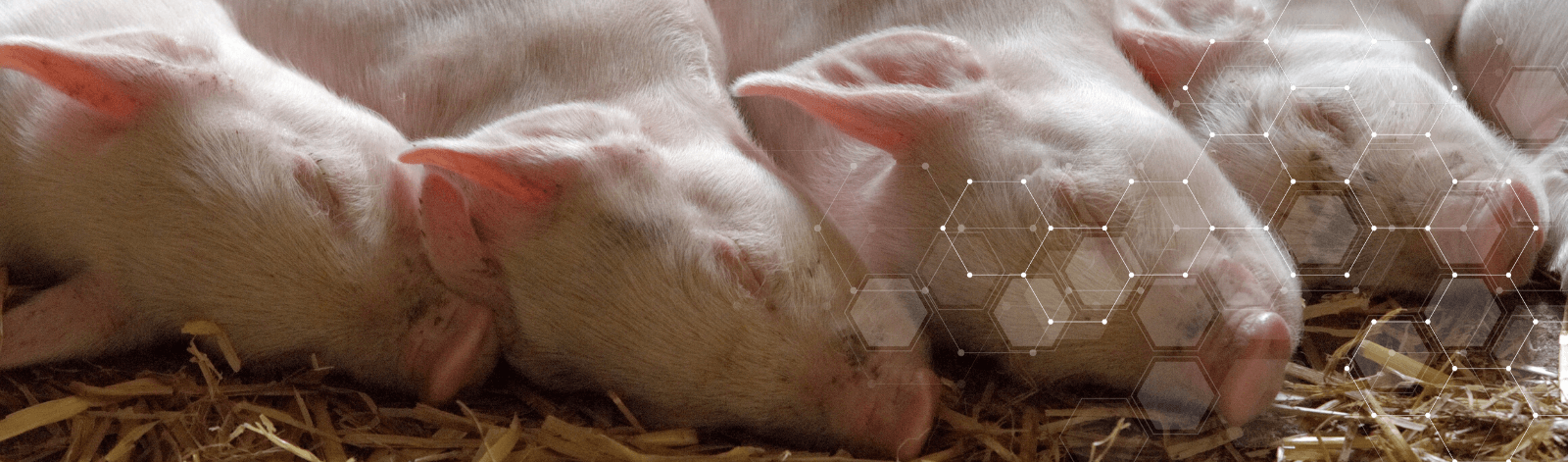 CeltiCal supports animal welfare