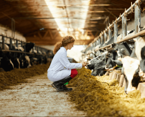 How a rumen buffer drives dairy performance