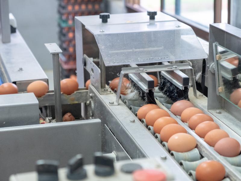 Egg production eggshell quality